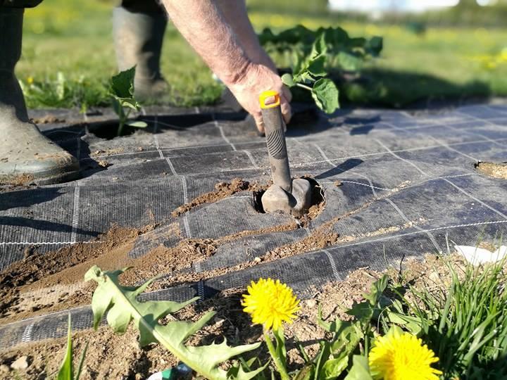 Agricola e la semina primaverile